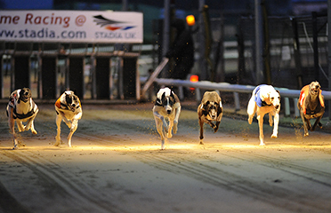 SIS and Global Tote sign UK greyhound streaming deal