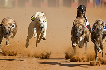 Greyhounds racing towards new territories and demographics